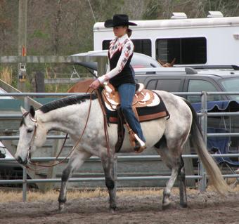 Western Pleasure Paint Horses For Sale